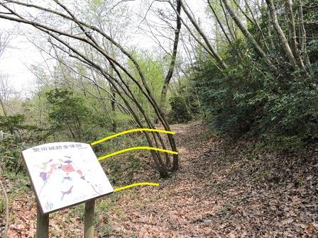 畝状竪堀(南半部分)