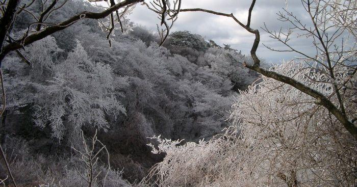 20150112六甲霧氷