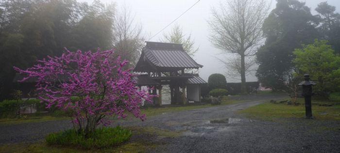 20150420霧の境内
