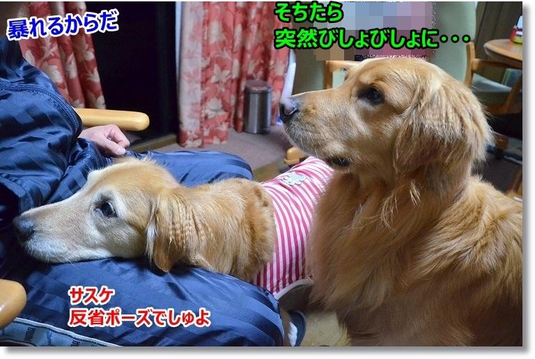 022_20150523101900807.jpg