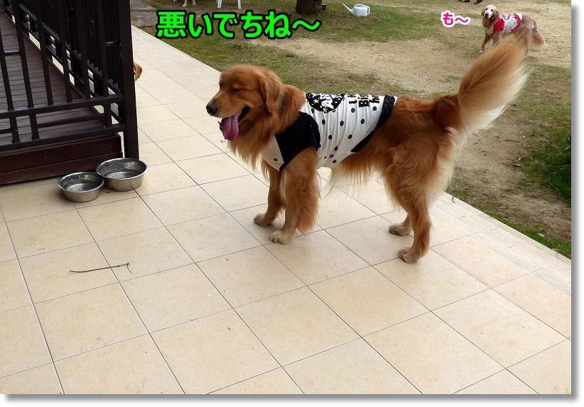 2014-11-05ラ・コーダ 004