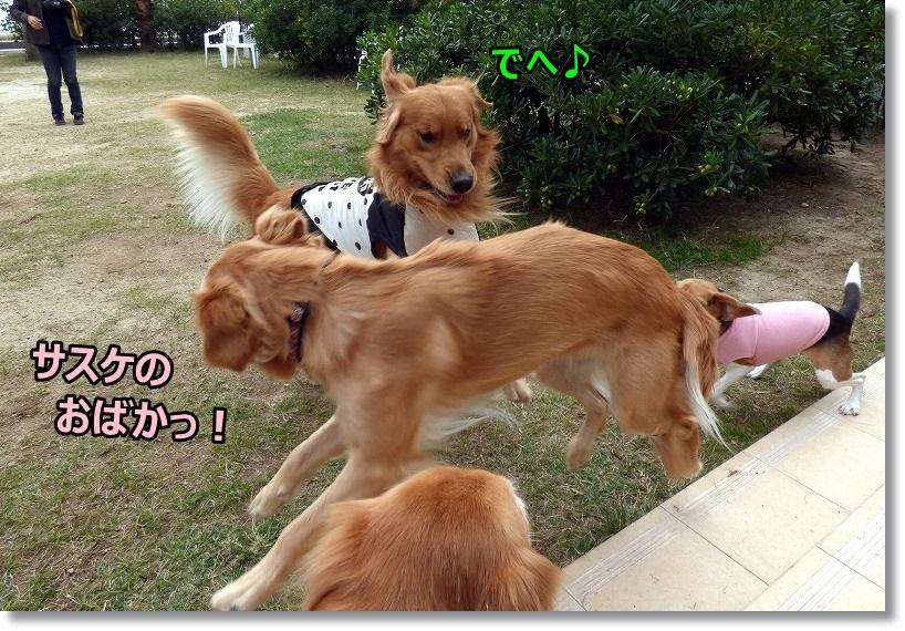 2014-11-05ラ・コーダ 010