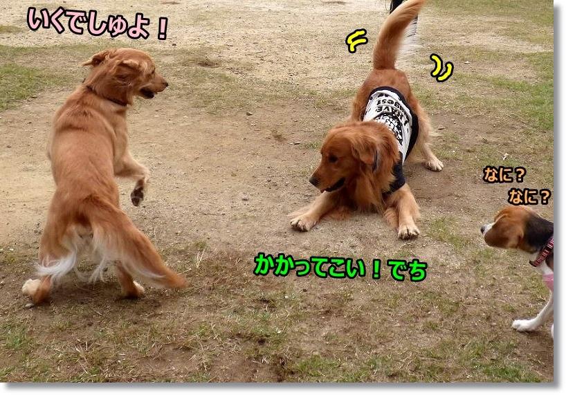 2014-11-05ラ・コーダ 018