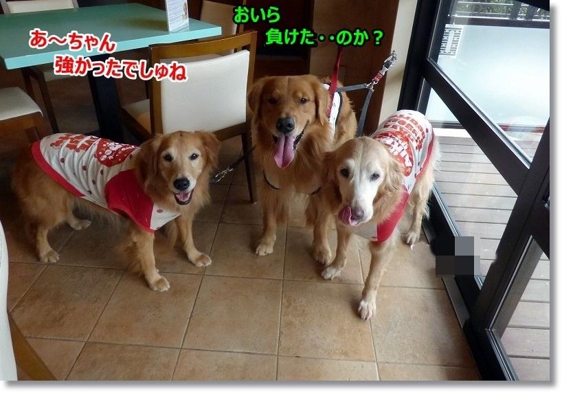 2014-11-05ラ・コーダ 039