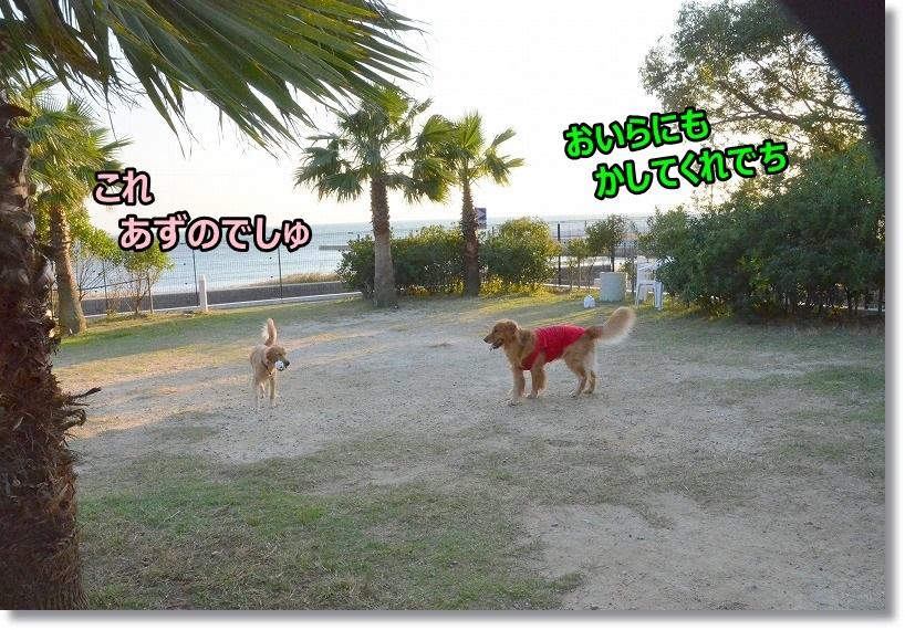 DSC_6351ほちい
