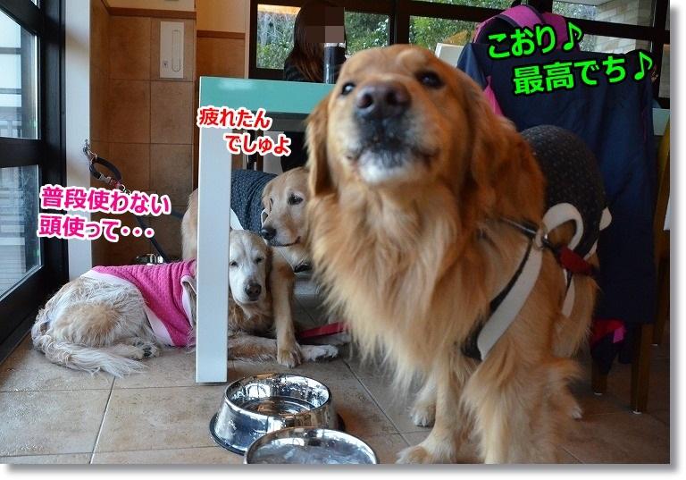 DSC_3115しゅごい?