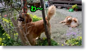 スナップショット 2 (2015-04-22 9-32)