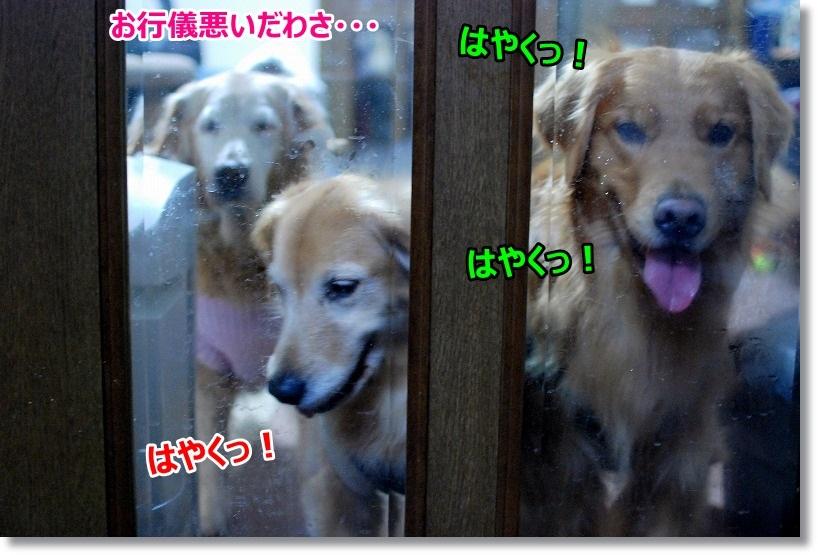 DSC_0022_20150220103539fd2.jpg