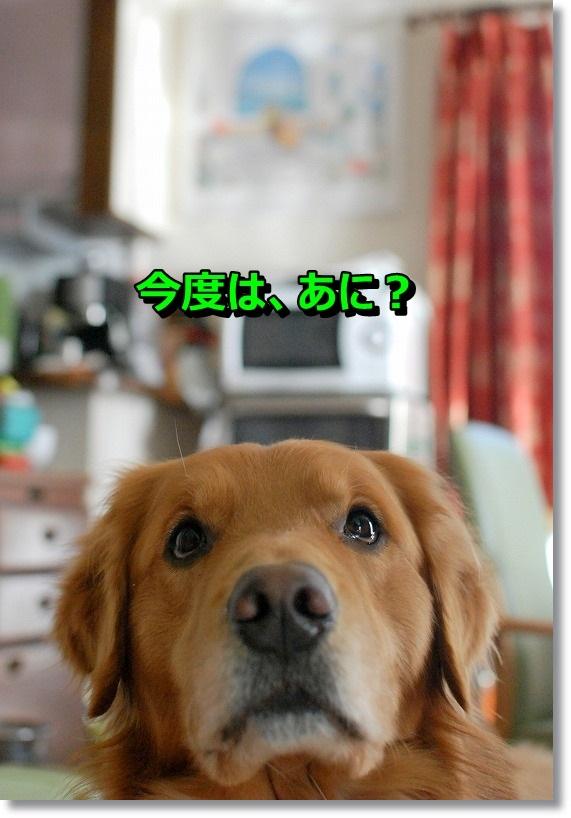 DSC_0170_201412311151147d9.jpg
