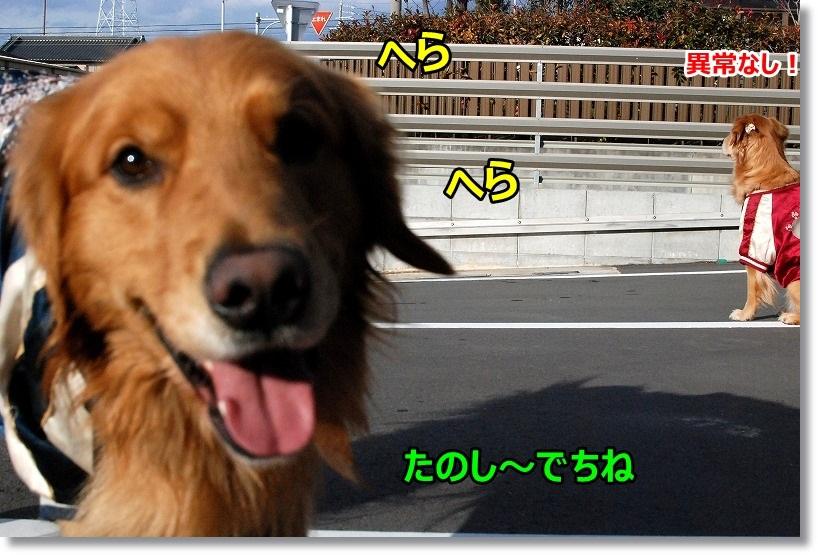 DSC_0187_20150302015940caf.jpg