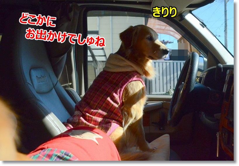 DSC_0476_201501302157318a4.jpg