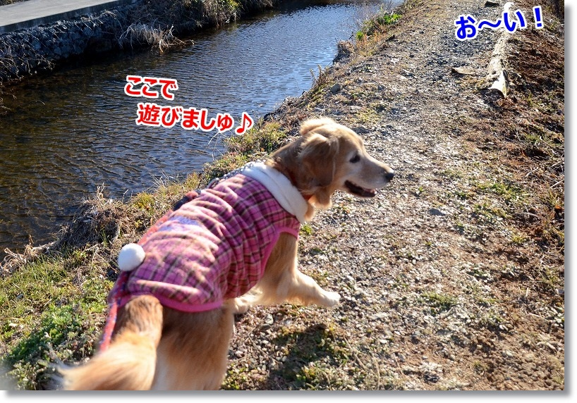 DSC_0527_201501312217514d0.jpg