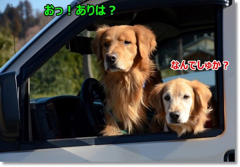 DSC_1104_20150206091007344.jpg