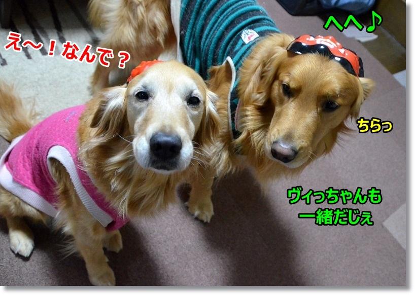 DSC_1562_20150204090951740.jpg