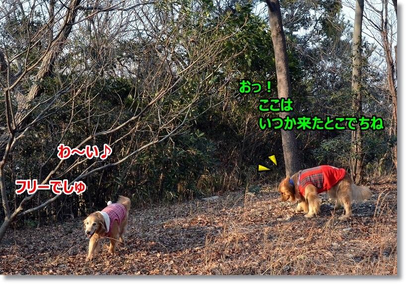 DSC_1926_20150306231327d4d.jpg