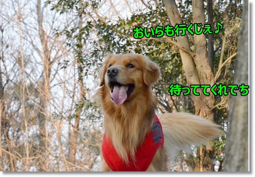 DSC_1972_20150308111915534.jpg