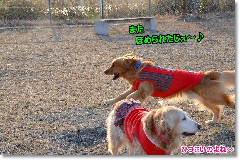 DSC_2097_201503082359538e9.jpg