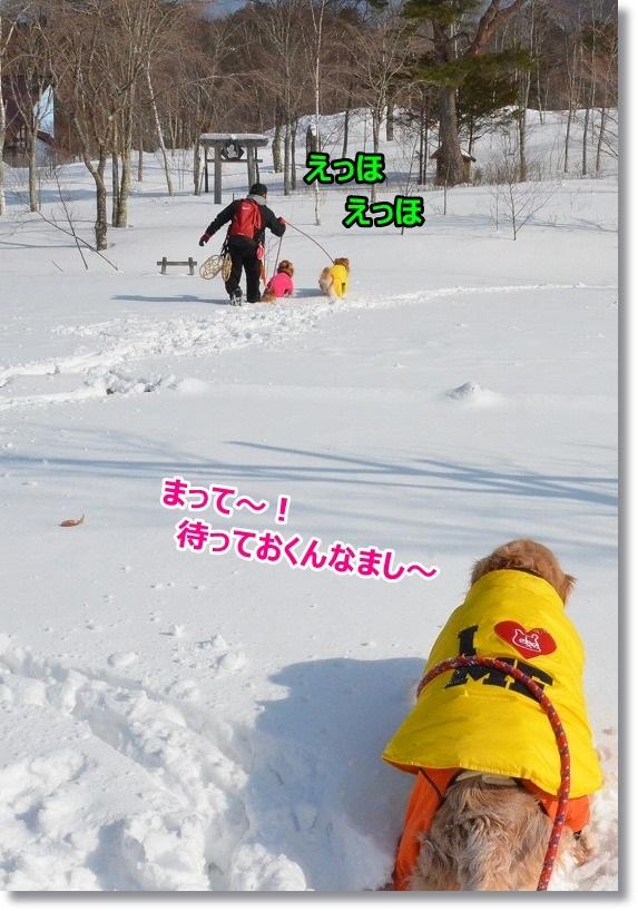 DSC_2229_20150221105933d2c.jpg