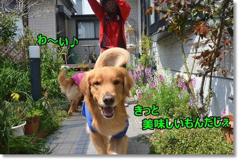 DSC_2291_201505301033578ad.jpg