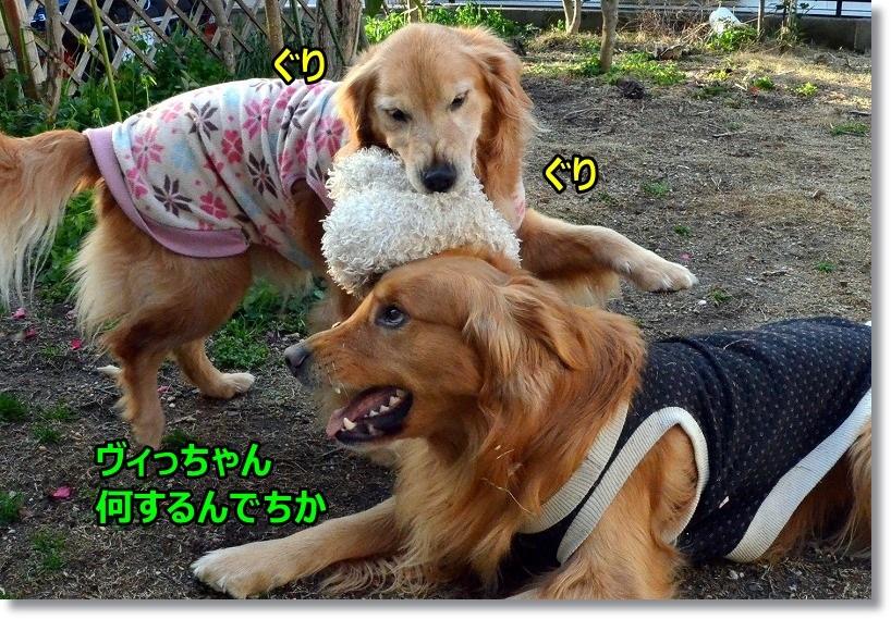 DSC_2807_20150325090555310.jpg