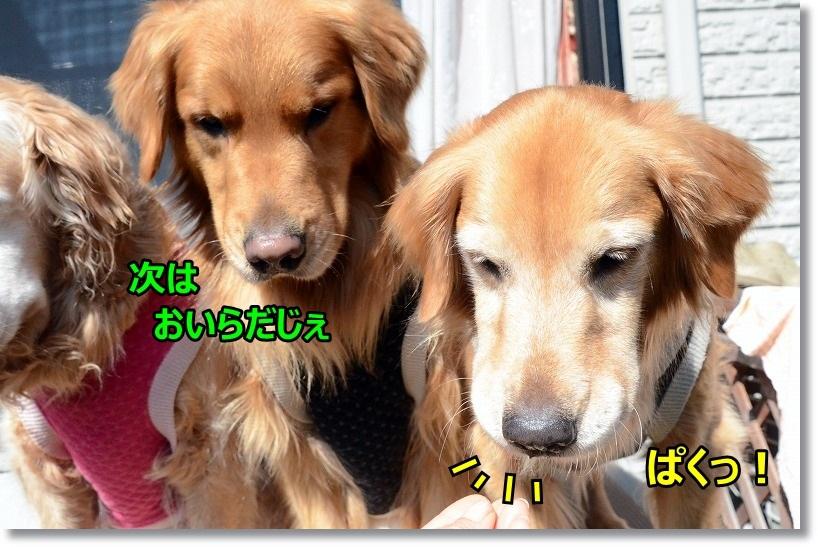 DSC_2953_20150326091906b7a.jpg