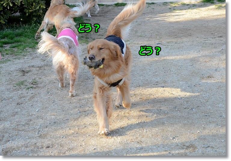 DSC_3014_20150401094302a5d.jpg