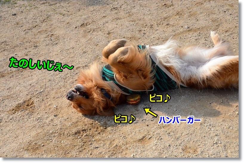 DSC_3334_20150320085522fa2.jpg