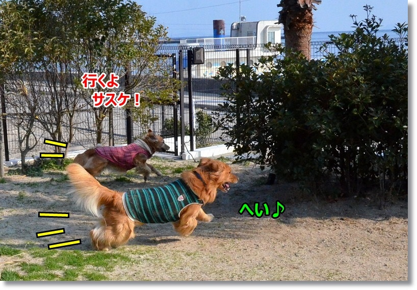 DSC_3367_20150320085525ea2.jpg