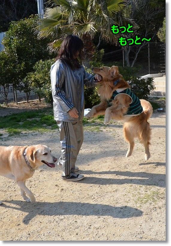 DSC_3409_2015032008560001d.jpg
