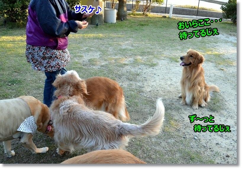 DSC_4193_20150112095309f6b.jpg