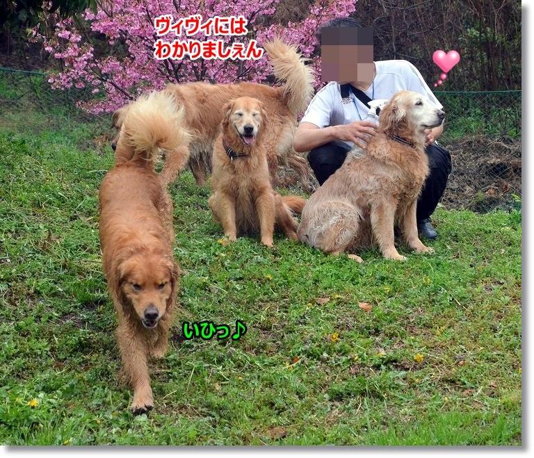 DSC_4403_20150410095352d9b.jpg