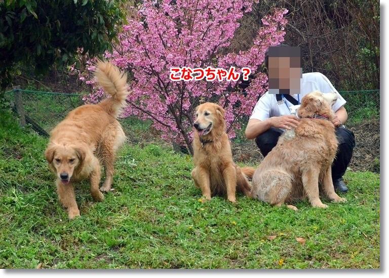 DSC_4404_20150410095354d65.jpg