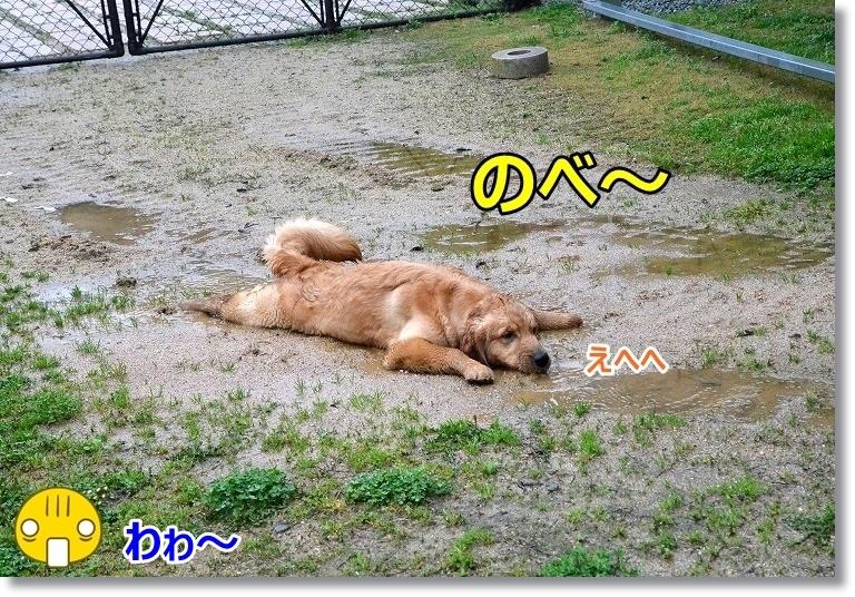 DSC_4421_20150411101310809.jpg