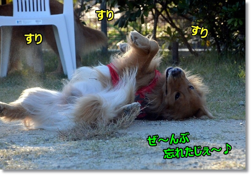 DSC_4427_20150121205751b6c.jpg