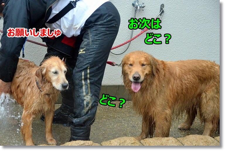 DSC_4477.jpg