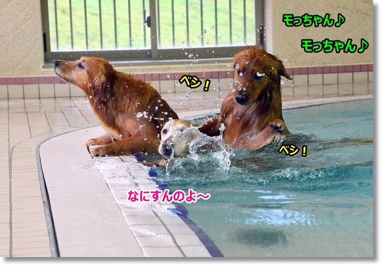DSC_4810_20150413110259a9d.jpg