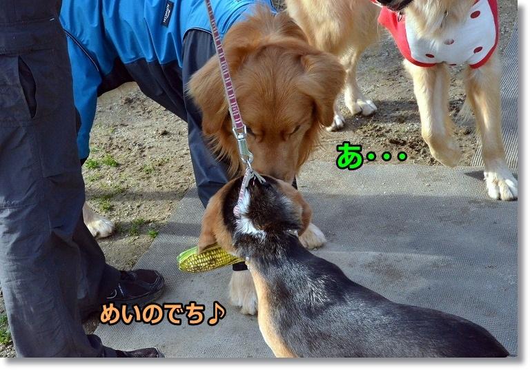 DSC_5064_20150427095004cff.jpg