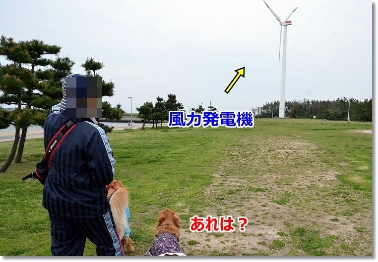 DSC_5367_20150424223316c6e.jpg