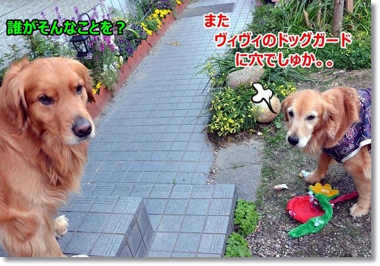 DSC_5383_20150418124005171.jpg