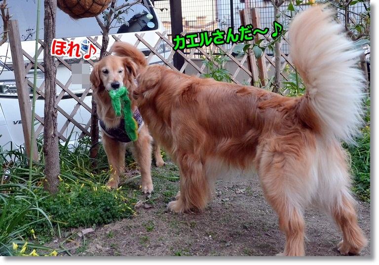 DSC_5395_20150418124024fbb.jpg