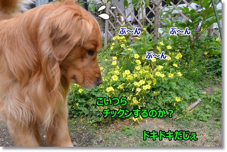 DSC_5439.jpg