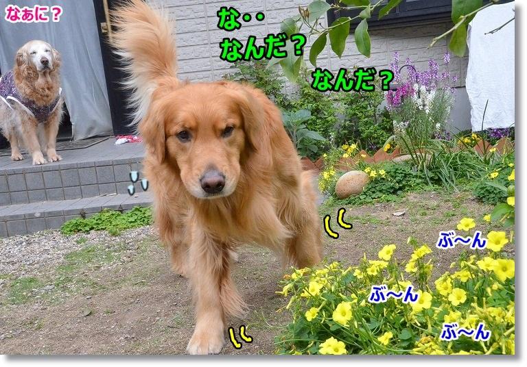 DSC_5441_20150429102837dd3.jpg