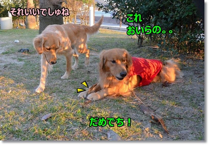 DSC_6400_2015030509383144d.jpg