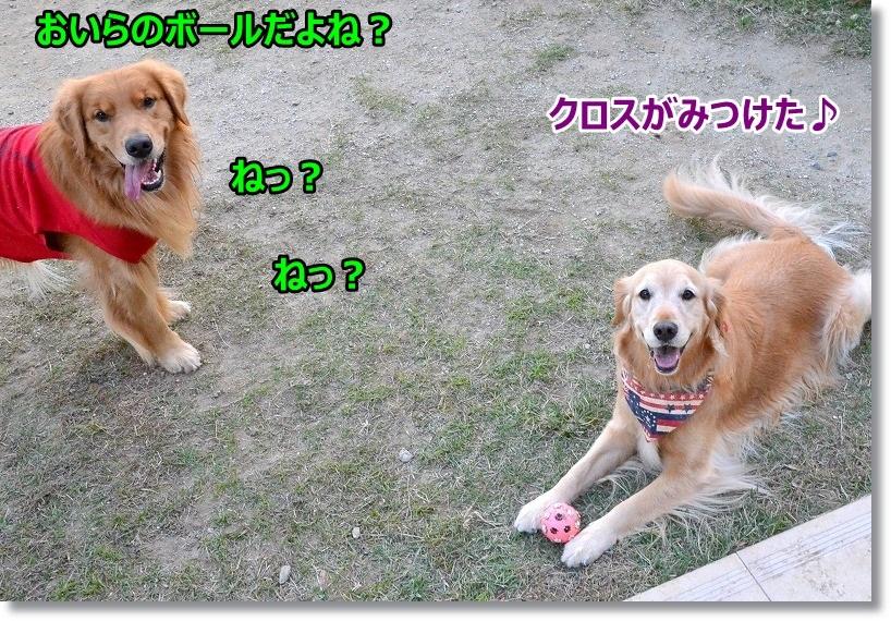 DSC_6456_201503060925319f8.jpg