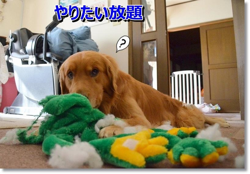 DSC_6708_201412292306360f6.jpg