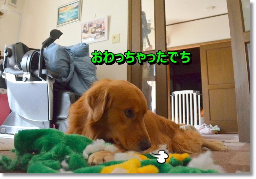 DSC_6709_20141229230638d28.jpg