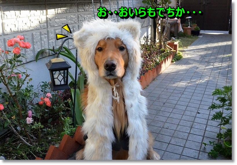 DSC_8266_2015010111232385e.jpg