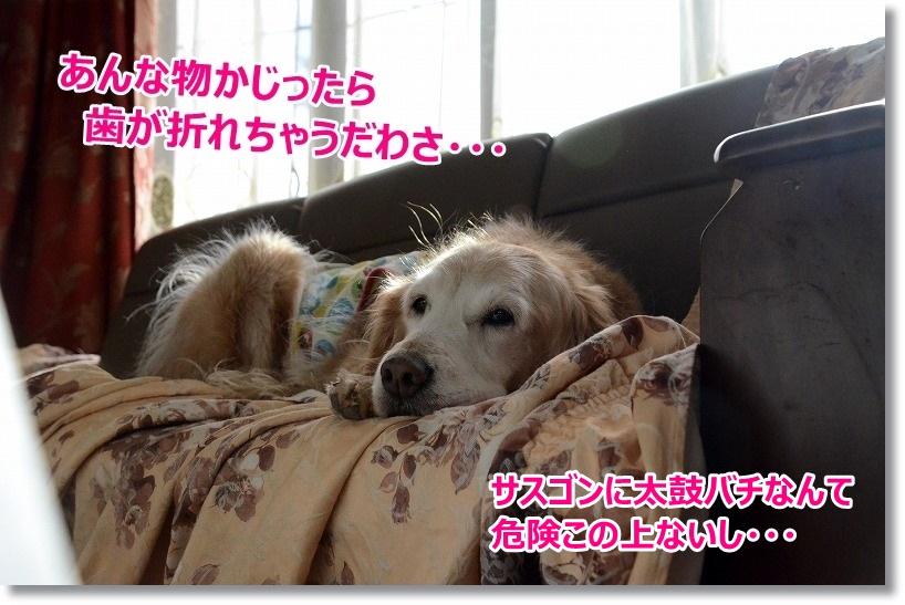 DSC_8308_201501102311262d4.jpg
