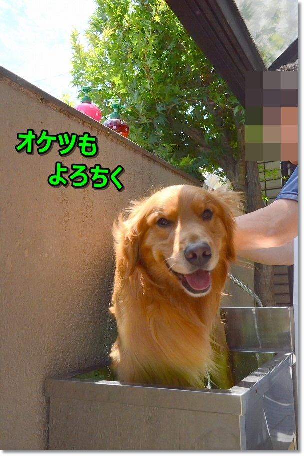 DSC_8340.jpg