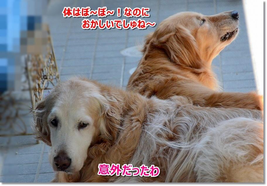 DSC_8378.jpg